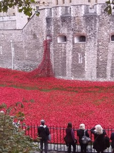 The Tower Poppies